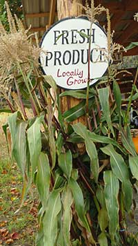 farm stand with corn stalks